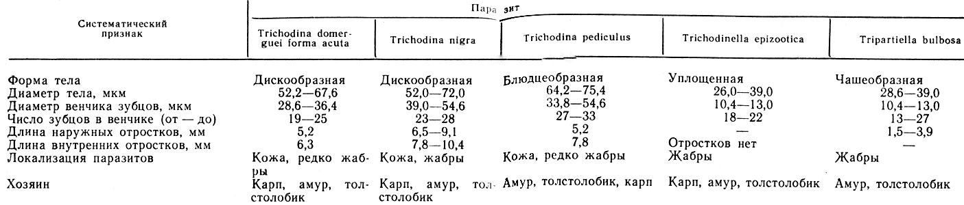 Таблица 16. Основные систематические признаки для определения триходин прудовых рыб (по Н. С. Ивановой)