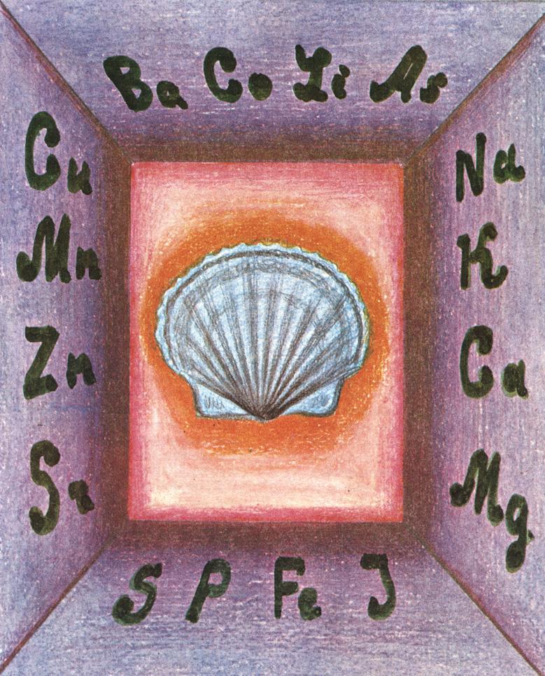 Не счесть богатств морского гребешка - ценнейшего источника минеральных веществ, а что еще содержит морской гребешок . прочтите в этой главе